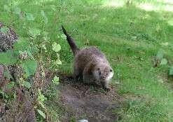 New light on otter mystery