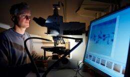 New understanding of cells could help in search for cancer cure