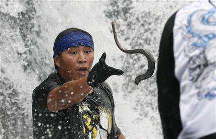 NW tribes drive effort to save primitive fish (AP)