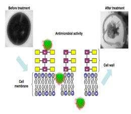 Breakthrough for MRSA treatment found