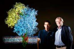 Researchers get a first look at the mechanics of membrane proteins