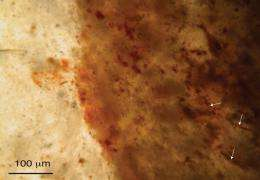 Research overturns oldest evidence of life on Earth
