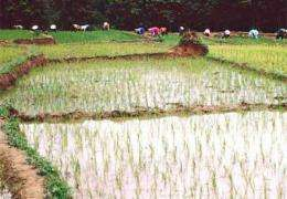 Rice as a source of arsenic exposure