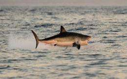 South Africa's Second Beach in the rural Eastern Cape is among the world's deadliest for shark attacks