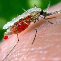 Stinky feet could pave the way for better ways to stop mosquitoes