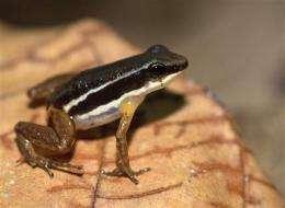 Study: Triple threat paints grim future for frogs (AP)