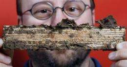 Termites' digestive system could act as biofuel refinery