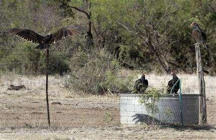 Texas drought will harm wildlife habitat for years (AP)