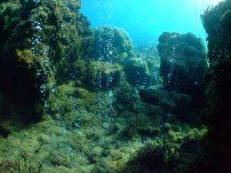 Tiny bubbles signal severe impacts to coral reefs worldwide