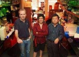 Transcription factor is potential target for liver cancer treatment