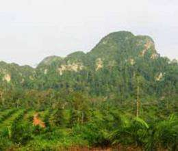 Wildlife in trouble from oil palm plantations, according to scientists