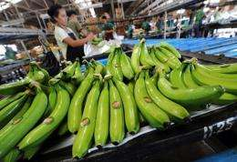 Workers pack freshly harvested bananas in the southern Philippine island of Mindanao in 200
