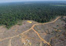 """A coalition of green groups in Indonesia has criticised a moratorium on deforestation as """"weak"""""""