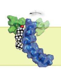 Alzheimer's protein structure suggests new treatment directions