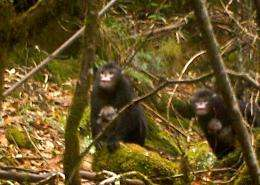 First images of newly discovered primate
