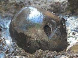 Macabre finds in the bog at Alken Enge