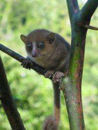 New primate species discovered on Madagascar
