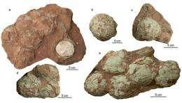 New oofamily of dinosaur egg found