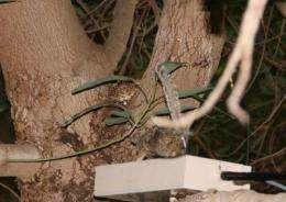 Robosquirrels versus rattlesnakes