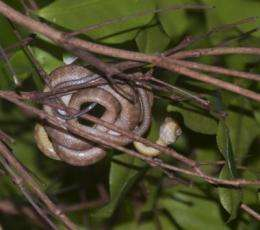 Snakes minus birds equals more spiders for Guam