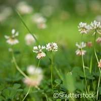 The more, the merrier: Mixing plant species for benefits