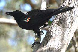 The original Twitter? Tiny electronic tags monitor birds' social networks