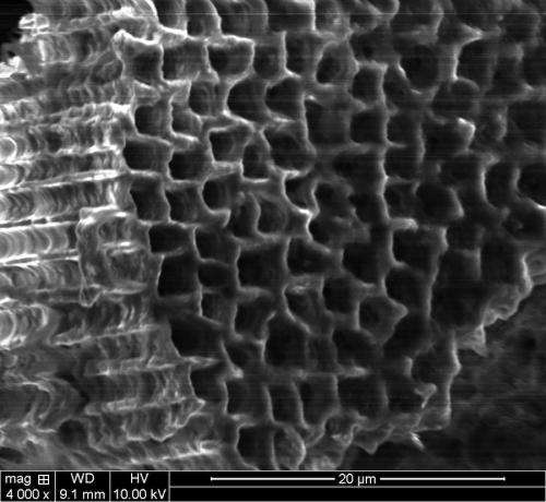 Toughened silicon sponges may make tenacious batteries
