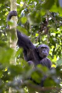 WUSTL anthropologists' work prompts Republic of Congo to enlarge national park