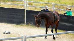 Researchers urge rethink of 'Monty Roberts' horse training method