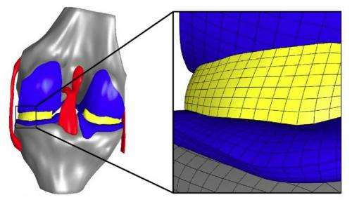 Researchers study knee stress at tissue, cellular levels