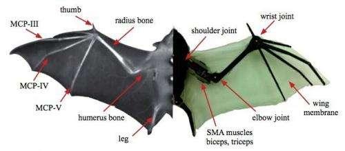 BaTboT is up for imitating smart bat maneuvers
