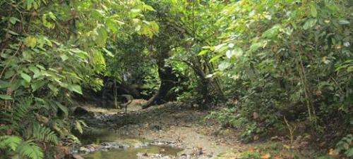 Biodiversity protects tropical rainforests from drought