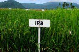 Carbon dioxide could reduce crop yields