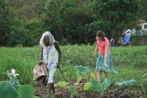Crocodile eggs measure river health: New land management tool using Aboriginal knowledge