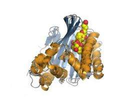 Discovery of plant proteins may boost agricultural yields and biofuel production