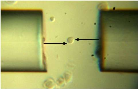 World's smallest wrench puts a new twist on microscopic manipulation