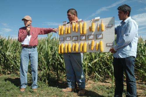 2012 produced extreme spider mite infestations in corn