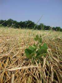 Scientists fight 'super weeds' with sustainability