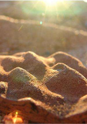 A 3.45-Million-Year-Old Diet