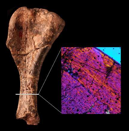 Scientists find oldest dinosaur – or closest relative yet