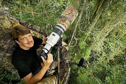 Glimpses of paradise: Magnificent birds, striking science in Harvard affiliate's National Geographic project