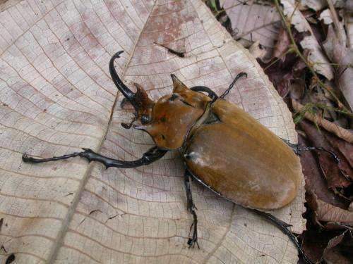 For every species of mammal, 300 arthropod species lurk in the rainforest