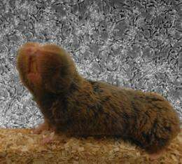 Researchers discover how underground rodent wards off cancer