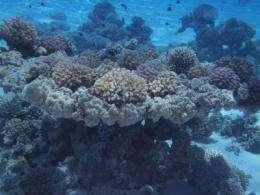 About one million species inhabit the ocean