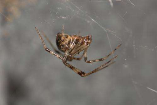 Spiders' design mastery allows for webs to stick to ground and elevated surfaces differently