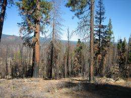 Active forest management to reduce fire could help protect northern spotted owl