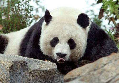A cub born to Mei Xiang at the National Zoo in Washington, DC has died