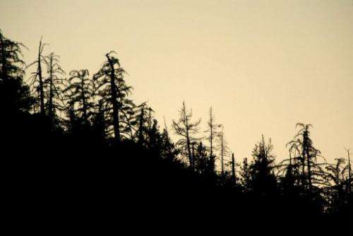 """A """"ghost forest"""" of dead and dying trees"""