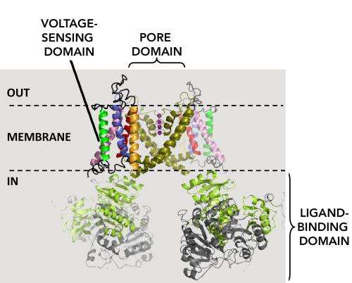A model-free way to characterize polymodal ion channel gating