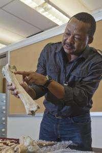 Analytical standards needed for 'reading' Pliocene bones